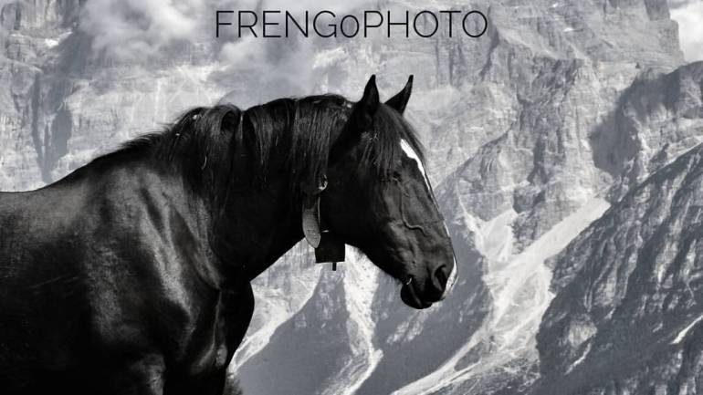 Cavallo nero