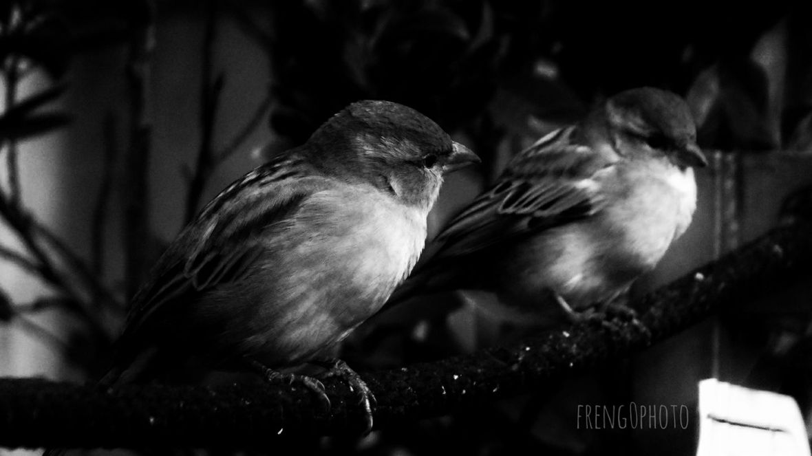 2 Birds in love