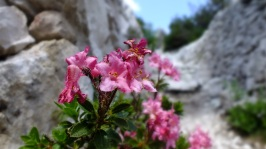 pink flowers in mountain