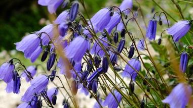 selvatic flowers