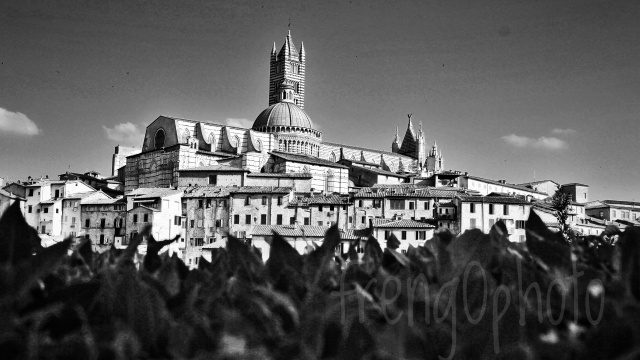 View of Duomo of Siena