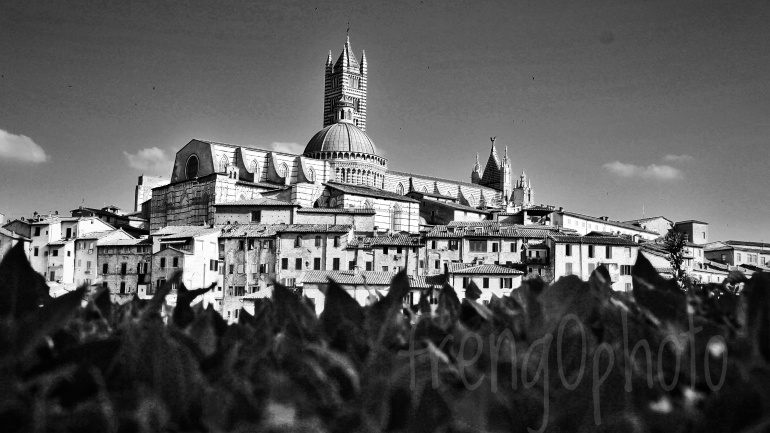 View of Duomo of Siena